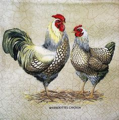 4 X Single Paper Napkins Party Wyandottes Chicken Decoupage Crafting 125 for sale online Napkin Decoupage, Decoupage Vintage, Decoupage Paper, Hen Chicken, Chicken Art, Arte Do Galo, Chicken Illustration, Chicken Pictures, Chicken Images