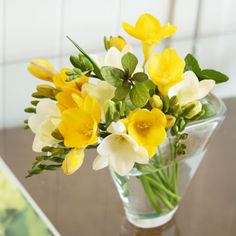 【3/1到着】高成園さんの極上フリージア&グリーン・・・送料無料!   花・花束の通販、配送【花・フラワーギフトなら青山フラワーマーケット】