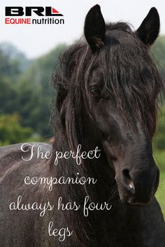 The perfect companion always has four legs. horse quote #BRLequine #performancehorse #loveyourhorse