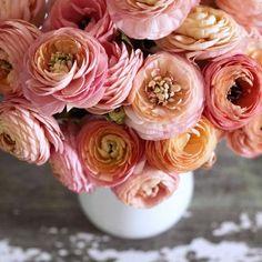 Ranunculus, Floral Arrangements, Flowers, Style, Swag, Persian Buttercup, Flower Arrangement, Flower Arrangements, Royal Icing Flowers