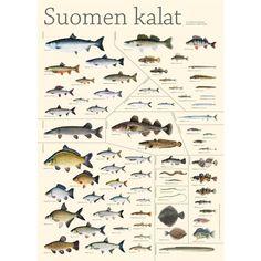 suomen kalat - Google-haku