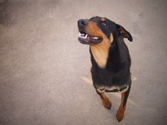 arlo  D A P S Shelter Dogs, Animal Shelter, Animal Protection, Dog Pictures, Animals, Animal Shelters, Animales, Animaux, Animal