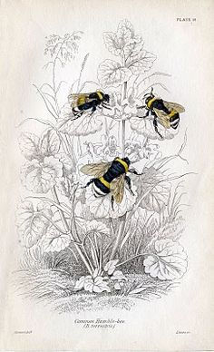 Vintage Bumble Bees!  Call A1 Bee Specialists in Bloomfield Hills, MI today at (248) 467-4849 to schedule an appointment if you've got a stinging insect problem around your house or place of business! You can also visit www.a1beespecialists.com!