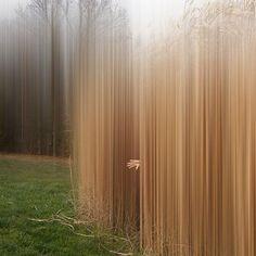 Untitled by Ellen Jantzen