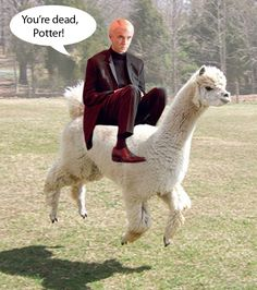 This is the Draco Malfoy about to defeat Harry Potter, on an alpaca Harry Potter Mems, Harry Potter Curses, Mundo Harry Potter, Harry Potter Draco Malfoy, Harry Potter Characters, Draco Malfoy Memes, Scorpius Malfoy, Severus Snape, Hermione Granger