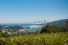 Image result for mill valley california images