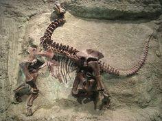 Squelette articulé d'un juvénile Camarasaurus lentus au Carnegie Museum of Natural History. Photo Daderot.