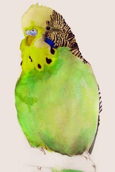 "Budgie portrait watercolour...looks like our ""Pogo"" he was a smart little bird. ;-)"