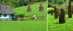 Romania, Garden Sculpture, Outdoor Decor, Plants, Travel, Life, Viajes, Destinations, Plant