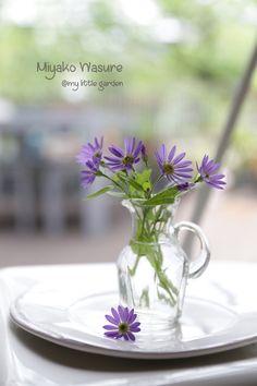 Miyako Wasure|Enjoy the Little Things