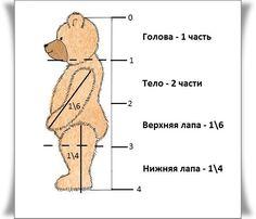 пропорции медведя тедди