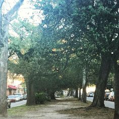 Path of trees #path #frenchquarter #nature #tree #beautiful by sbrownlee02