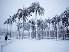 Een man loopt naast palmbomen terwijl het hard sneeuwt in de oude stad van Jeruzalem.