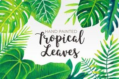 Watercolor Tropical Leaves by Peachycottoncandy on @creativemarket