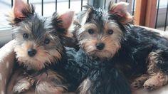 A SAN FRANCISCO UNA NUOVA LEGGE CHE CI DA IL METRO DI PARAGONE SULLA SENSIBILITA' PER TALE ARGOMENTO. VOI CHE NE PENSATE? SARA' UTILE?   San Francisco, nuova legge per i negozi di animali: in vendita solo cani e gatti abbandonati  Il comune di San Francisco ha approvato un provvedimento che obbliga i negozi per animali a vendere solo quelli abbandonati o provenienti dai rifugi, e comunque non più giovani di otto settimane. La decisione è arrivata nei giorni scorsi per combattere le…