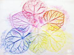 Color Wheel + Leaf Rubbing |