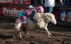 6 Seconds and a Sheep: Welcome to the World of Mutton Busting ...