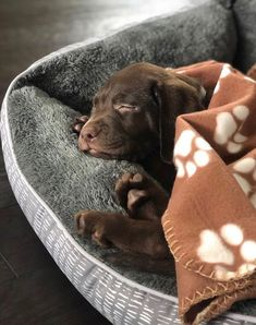 PlayBarkRun - Becoming Better For Your Dog Adorable La. - PlayBarkRun – Becoming Better For Your Dog Adorable Lab Puppy - Labrador Retrievers, Golden Retriever, Labrador Dogs, Retriever Puppies, Chocolate Labrador Retriever, Dogs Pitbull, Cute Dogs And Puppies, Baby Dogs, I Love Dogs
