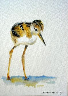STILTS    Stilt.....i couldnt think of a more fitting name for this bundle of fluff and legs that never end!! This little Black Necked Stilt chick sure earned his name!      this piece is a fully hand painted original by seller (© witsend) on 300 lb cold press watercolor paper and may easily be framed into standard size, ready-made frame, with or without a mat.      Your piece will arrive with all necessary hanging apparatus in place for your immediate enjoyment. As with all of my pieces…