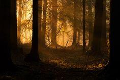 Zapach żywicy - Oblicza Puszczy Białowieskiej: Czarodzielnica