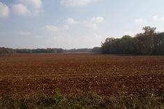 fall fieldbeauty