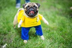 Pug from Pug Team Kiev Party #pugteamkyiv