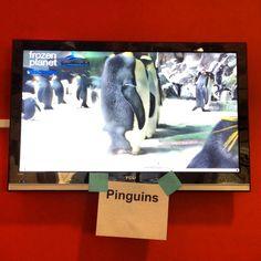 pinguin cam
