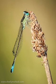 Amazing Facts – Lets Learn Something Macro Photography, Fun Facts, Insects, Hate, That Look, Collection, Funny Facts
