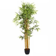 "Paris Prix - Plante Artificielle ""Bambou"" 180cm - Achat / Vente fleur artificielle    - Cdiscount Ficus, Pots, Yucca, Plantar, Incense, Zen, Products, Perms, Large Plants"