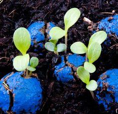 A l'origine, le mouvement actif de guerilla gardening (consistant à re-végétaliser des terrains vagues et zones urbaines laissées à l'abandon), incitait chaque citoyen à jeter quelques poignées de graines par terre ou, plus militant, à lancer des grenades pleines de semences. Les marques de jardinage se sont emparées de cette tendance en proposant à l'échelle domestique, des billes de graines de fleurs à jeter à la volée sur le haut d'un mur inaccessible afin de refleurir ces surfaces.