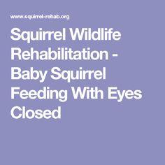 Squirrel Wildlife Rehabilitation - Baby Squirrel Feeding With Eyes Closed Baby Squirrel Care, Squirrel Pictures, Baby Feeding Chart, Pet Care, Baby Care, Newborn Care, Baby Animals, Small Animals, Fur Babies