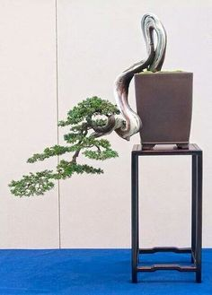 Helpful Guidelines In Growing Indoor Bonsai Trees This Juniperus Dances Slowly. Great and Really Beautiful Bonsai Acer, Juniper Bonsai, Bonsai Garden, Garden Plants, House Plants, Indoor Bonsai, Indoor Plants, Mini Bonsai, Unusual Plants