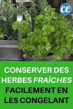 Pour conserver les herbes fraiches plus longtemps il faut les congeler