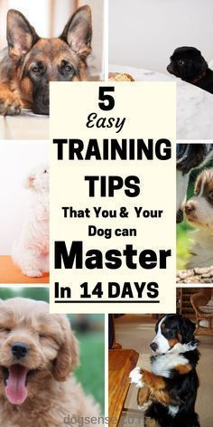 Dog Training Tips That Your Dog Will Love In 2020 Best Dog Training Puppy Training Tips Puppy Training