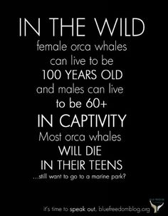 Marine life belongs in the wild, not in captivity!