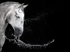 The horse is the most gorgeous element here--not the Hasselblad CFV-50 it was taken with.