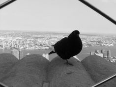 One Legged Bird on Empire State Building