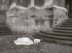 El alma de los perros en blanco y negro y con humor: Sammallahti    http://www.srperro.com/blog_perro/el-alma-de-los-perros-en-blanco-y-negro-sammallahti
