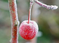 Icy fruit | Flickr - Photo Sharing!