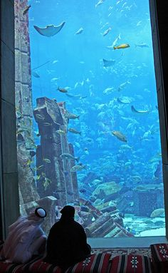 The Lost Chambers Aquarium. Atlantis the Palm hotel. Dubai. by elsa11, via Flickr #hotelinteriordesigns