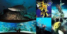 Siam Ocean World Bangkok Aquarium