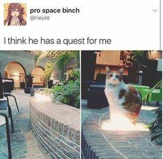 37 New Pretty Dang Funny Memes