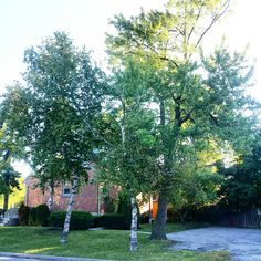 Fall is here time to remove hazardous trees and limbs before winter comes free estimates call 647-545-8733 thank you