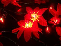Poinsettia Flower Vintage String of 20 Christmas Lights | 20 ...