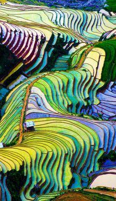 #color #rice field #gradation #棚田 #ベトナム(Via:  Beautiful Terraced rice field in Vietnam  )おぉ...きれいですねぇ。天然でこんな風景があるのか...田んぼや畑のあぜ道の雑草対策にスタボンはどうでしょ?