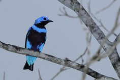 Fotografias de aves brasileiras - Concurso Avistar 2010 - BICHOS - Álbum de Fotos