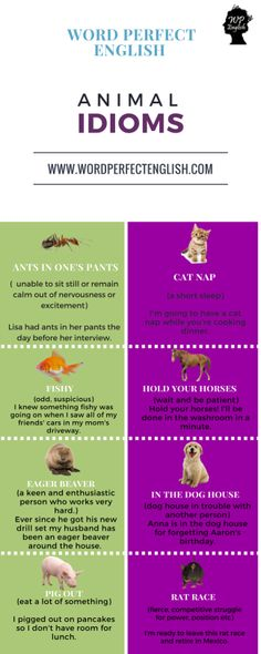 English Idioms with Animals!Hope we inspire you! :) #learnlanguages #loveenglish #inspiration