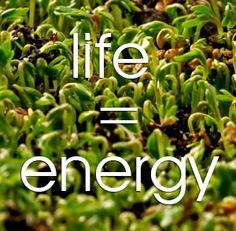 De werkzame energie van planten in beeld