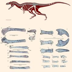Patagonya'da yeni bir tür dinozor bulundu,