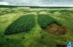 vida eco organica   Vida Eco Organica (eco life): Como Prevenir el Efecto Invernadero